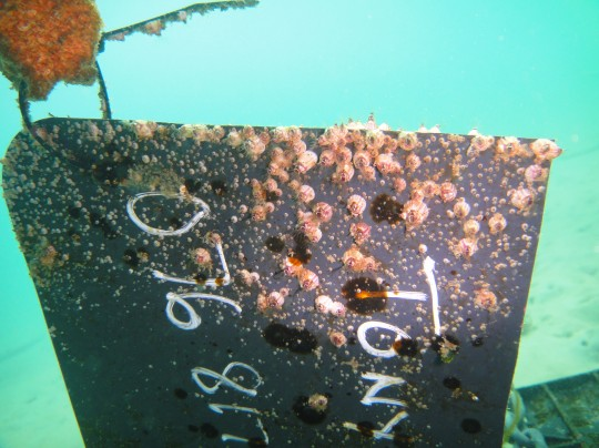 The sign has barnacles growing on it now