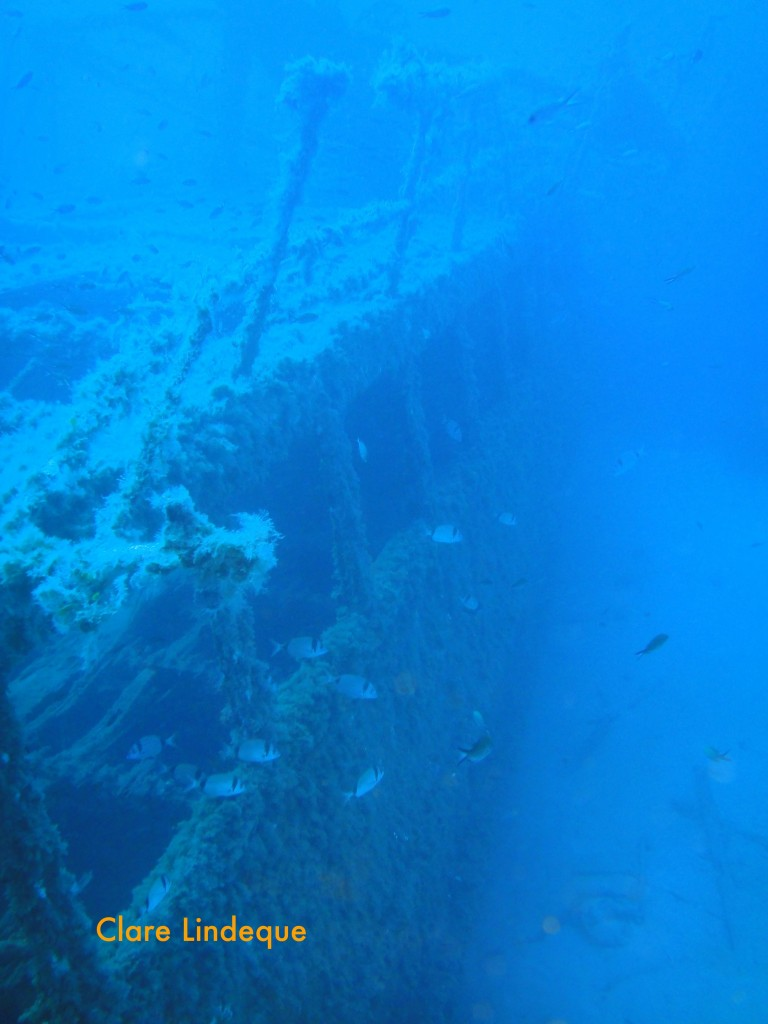 Saddle bream down the side of the wreck