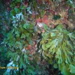 Seaweeds and algae growing inside the tunnel