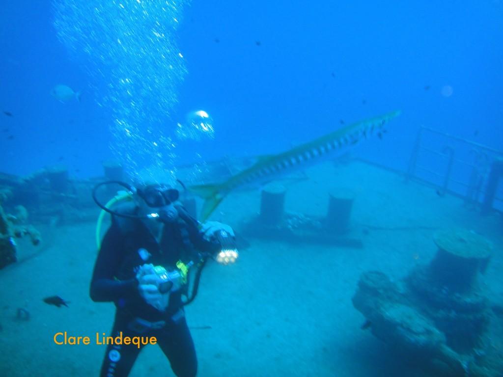 Tony observes a barracuda near the bow of the Um El Faroud