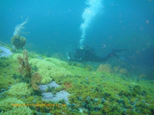 Tony swims over the rocky bottom