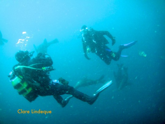 Newsletter: Wreck penetration and night dives