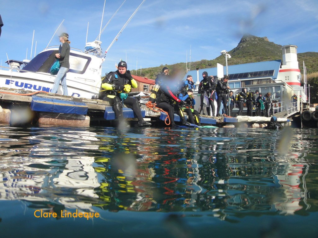 Divers waiting to enter the water on the floating jetty