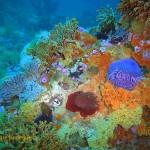 A riot of colour on Atlantis Reef