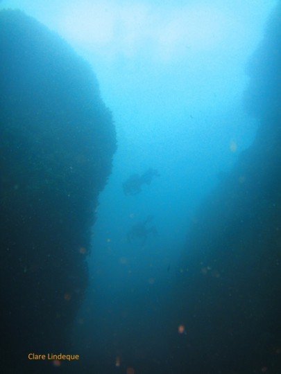 Divers pass between the pinnacles