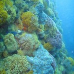 Lower down on the pinnacle, more sea fans and invertebrates appear