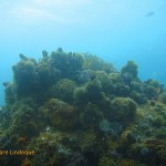Redbait and urchins cover the tops of the pinnacles