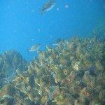 Fish above the redbait that crowns the pinnacles