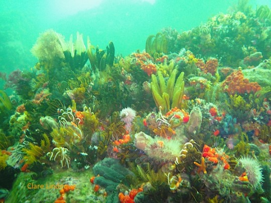 Colourful reef life at Roman Rock