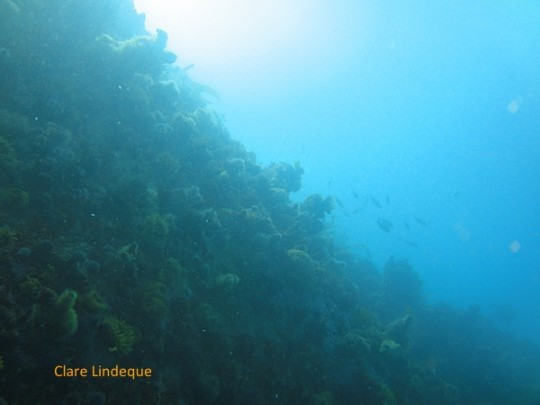 The reef extending up towards the surface