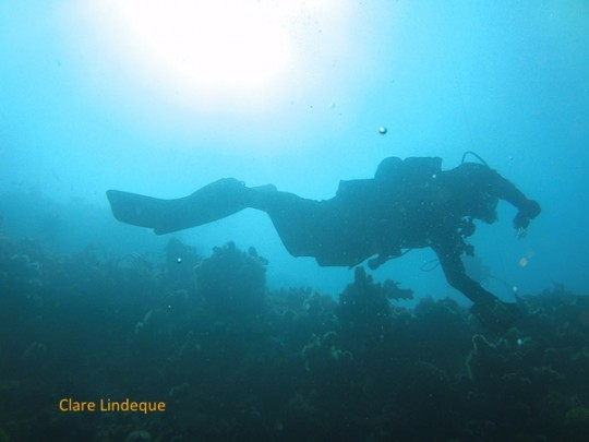Peter Southwood swimming a shallow contour at Caravan Reef (south)