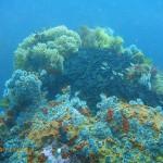 Narrow ridges of rock around the edge of the main reef