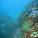A flagellar sea fan in a narrow gully