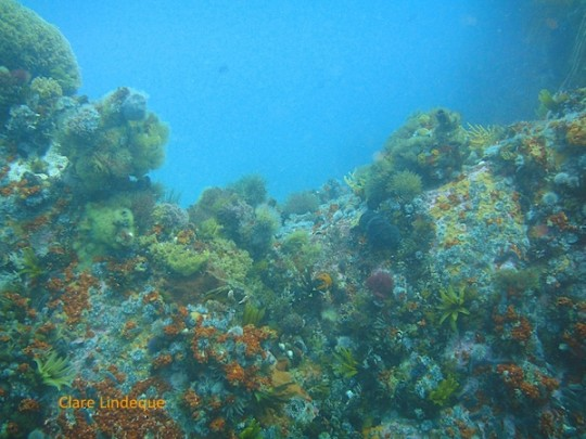 Abundant invertebrate life on the lower reef