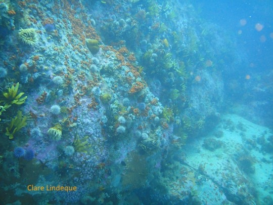 The reef drops off steeply