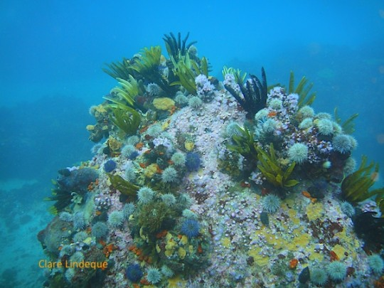 Another of the rocks at the base of the reef