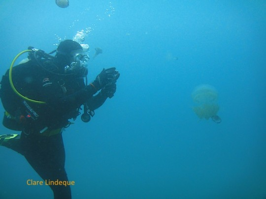 Goot inspects the root-mouthed sea jelly