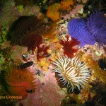Anemones in a square