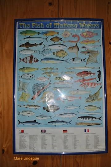 Fish of Malta