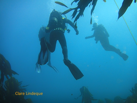 Ascending after the dive