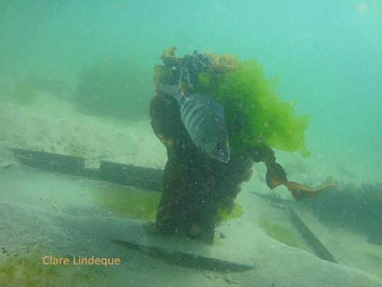 Sea life: Steentjies