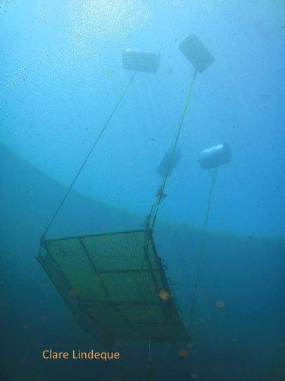 Dive platform seen from below