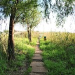 Path leading to the Oog
