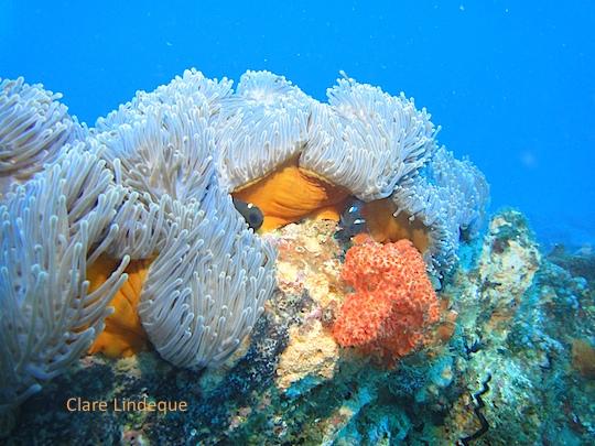 Dive sites (Southern Mozambique): Kev's Ledge