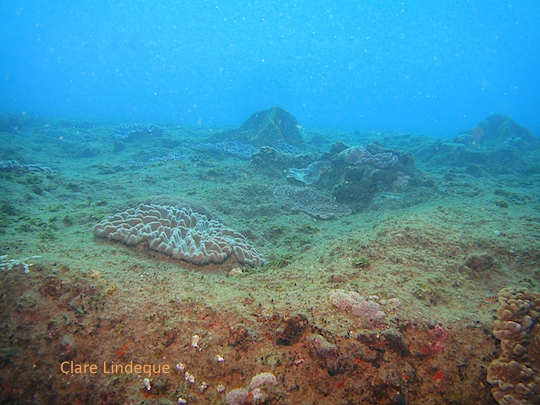 View across the flat top of the reef
