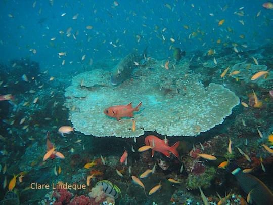 The aquarium feel on top of Three Sisters