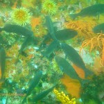 FIsh feeding among the anemones and sea fans