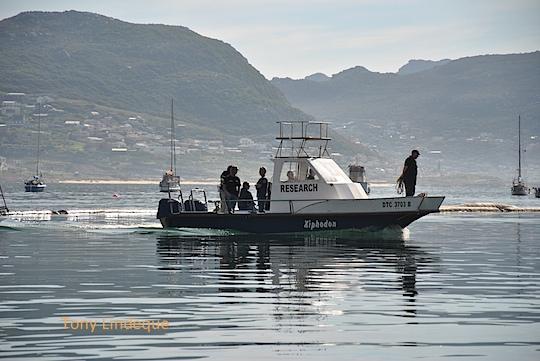 Shark research vessel