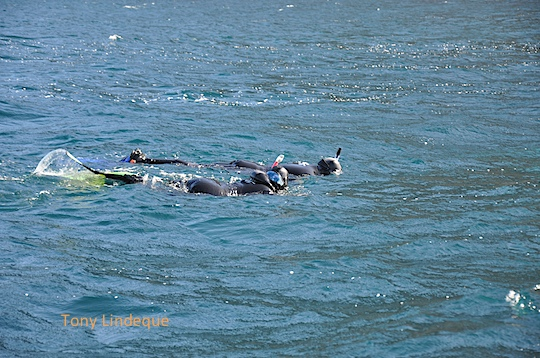 Snorkelers on the surface