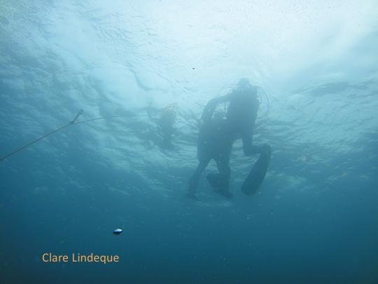 Divers descending onto the SAS Pietermaritzburg