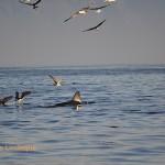 Birds wait for scraps after a successful predation