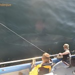 A shark swims past the side of the boat