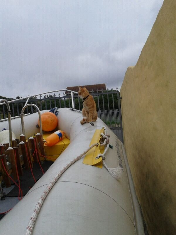 Boat maintenance with help from the cat