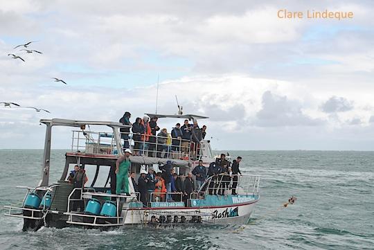 The Marine Dynamics shark cage diving boat at anchor