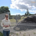 In which I meet Wally the whale