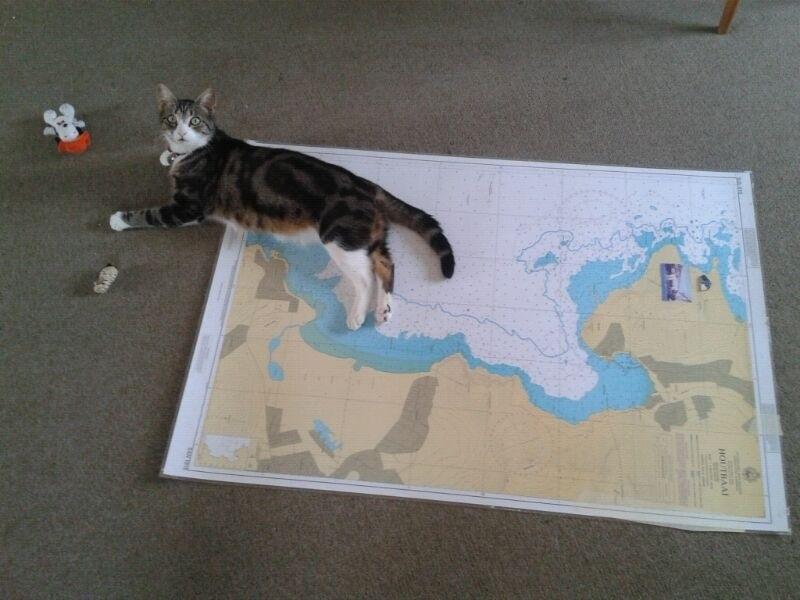 Nautical cat