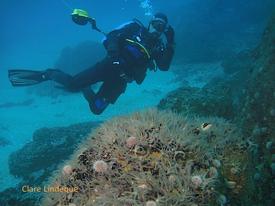 Tony and some brittle stars on a boulder
