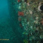 The reef wall covered with life