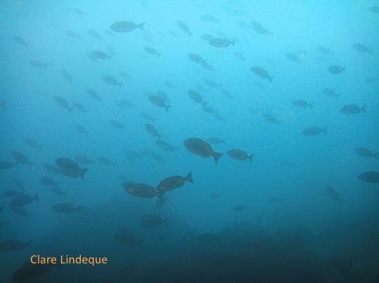 Fish at the entrance to Maori Bay