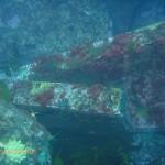 Wreckage of the Oakburn