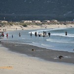 Further down the beach, the trek fishermen and team are at work with the net