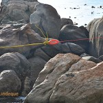 The yellow line attached to the net, joined to a light red line for pulling it ashore