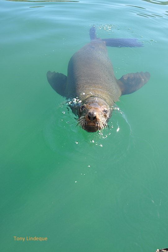 Seal on the surface
