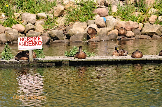 Friday photo: Ducks in a row