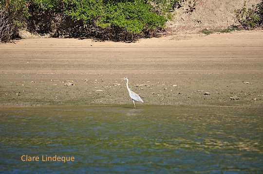 An egret in the shallows