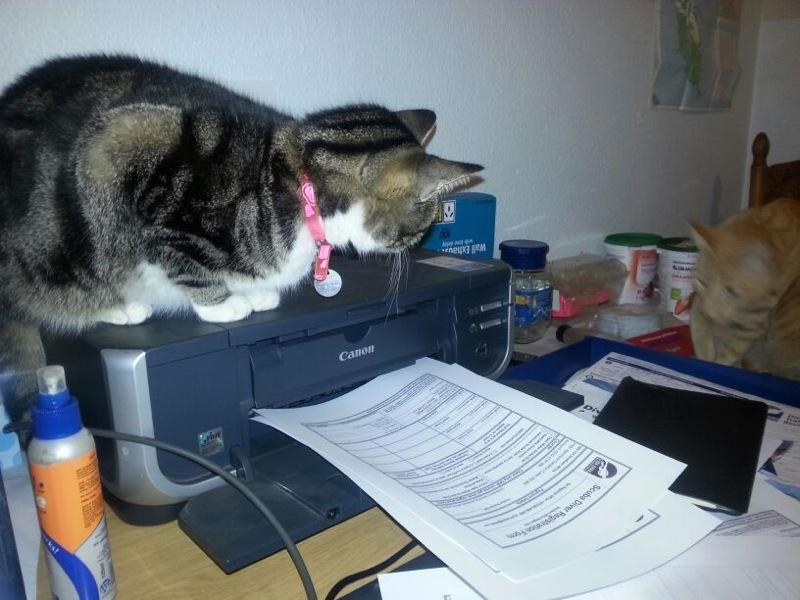 Mini cat and Junior watching the printer